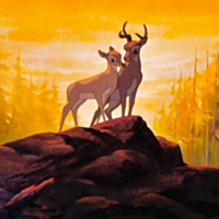 Bambi vs. Bambi: A Life in the Woods