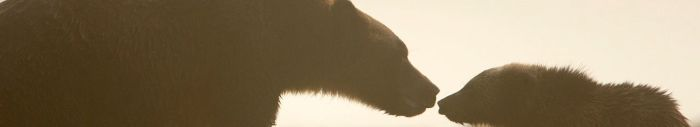 brother bear silhouette2