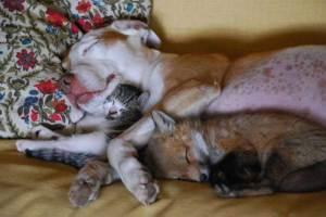http://arbroath.blogspot.co.uk/2012_06_16_archive.html